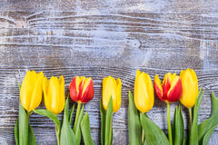 Holiday Tulip Flowers on Wooden Background Stock Images