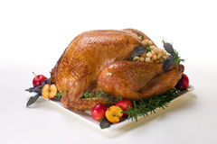 Holiday turkey on white Stock Photography