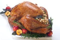 Holiday turkey on white Stock Photos