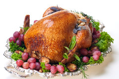 Holiday turkey on white Royalty Free Stock Photography
