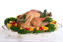 Holiday turkey on white Stock Photos