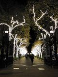 Holiday Winter Lights on Tree Lined Walkway stock photography