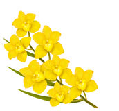Holiday yellow flowers background. Stock Images