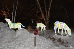 Holiday Zebras In The Snow Royalty Free Stock Image