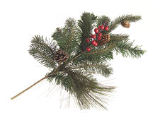 Holidaydecorative fir branch with berries and cone Stock Photo