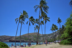 Holidaymakers enjoying sunshine, snorkeling and swimming at the Hanauma Bay beaches, Hawaii. Royalty Free Stock Photography
