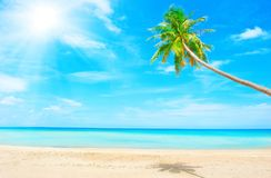 Beach with palm tree over the sand. Holidays Background. Beautiful beach with palm tree over the sand Stock Image