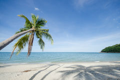 Holidays Background. Beautiful beach with palm tree over the sand Royalty Free Stock Photography