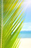 Beautiful beach with palm tree over the sand. Holidays Background. Beautiful tropical beach with palm tree and sand Stock Photos