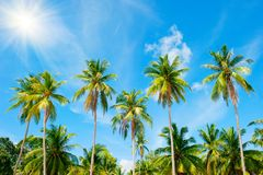 Coconut palm trees perspective view. Holidays Background. Coconut palm trees perspective view Royalty Free Stock Image