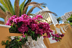 Holidays near the ocean on Tenerife, Canary, Spain, Europe. Holidays near the ocean on Tenerife which belongs to the Canary Islands, Spain, Europe stock images
