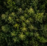 Aerial view of trees in a forest. royalty free stock photos