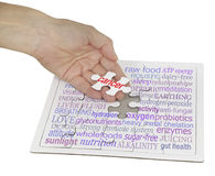 The holistic cancer cure puzzle. Hand holding a jigsaw puzzle piece showing the word CANCER, the remainder of the puzzle contains a cancer word cloud on white Royalty Free Stock Photography
