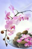 Holistic therapy. Stones and petals in the water with pink orchid around Stock Images
