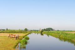 Holländare landskap med hästar bevattnar och windmillen royaltyfri fotografi