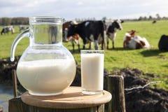 Holländare mjölkar Royaltyfri Fotografi