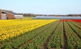 Holländische Blumen Stockfoto