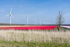 Holländische bunte Tulpefelder mit Windturbinen Lizenzfreies Stockfoto