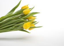 Holländische gelbe Tulpen Stockfoto