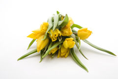 Holländische gelbe Tulpen Lizenzfreies Stockfoto