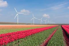 Holländische Landschaft mit Tulpen und Windturbinen Stockfotografie