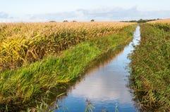 Holländische landwirtschaftliche Landschaft im Herbst Stockfotografie