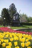 Holländische Windmühle mit Tulpen Stockbilder