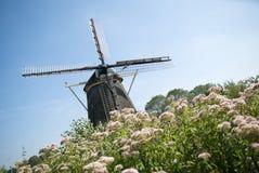 Holländische Windmühle und Blumen Stockbild