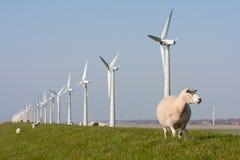 Holländische Windmühle und Schafe Lizenzfreies Stockbild