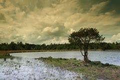 Holländischer Landschaftbaum durch das pool1 Stockbilder
