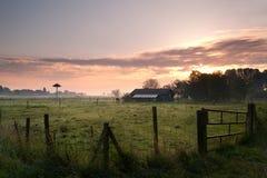 Holländisches farn im Morgen Stockbild