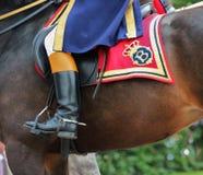 Holländsk kunglig skicklig ryttare i handling Royaltyfri Fotografi