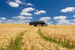 Holländsk ladugård i ett mognande skördfält i Dorset Royaltyfri Fotografi