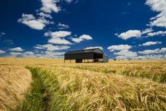 Holländsk ladugård i ett mognande skördfält i Dorset Royaltyfria Foton