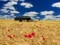 Holländsk ladugård i ett mognande skördfält i Dorset Arkivbild