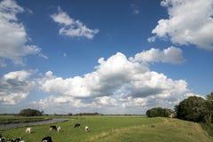 holländsk liggande arkivbilder