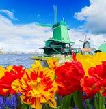 Holländsk wind mal Arkivbild