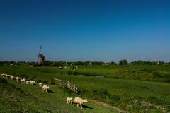Holländsk windmill och får Arkivbild