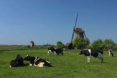 Holländsk windmill och ko Arkivfoto