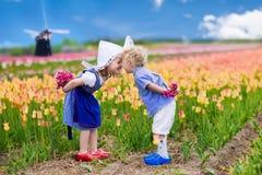 Holländska barn i tulpanfält Arkivfoto
