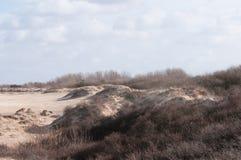holländska dyner Arkivfoton