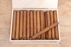 Holländska kvalitets- cigarrer Fotografering för Bildbyråer