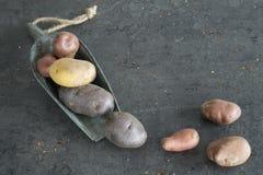 Holländska potatisar i tappningmetallsked royaltyfria foton