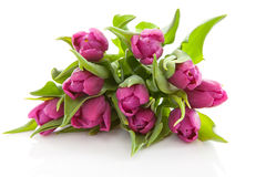 holländska purpura tulpan för bukett Royaltyfria Foton