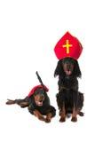 Holländska Sinterklaas och svarta Piet hundar arkivfoto