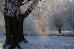 Holländska snöträd med det djupfrysta diket och solen Royaltyfria Bilder