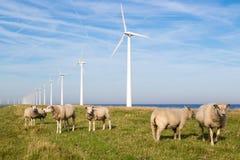 Holländska vindturbiner för lång rad med flocken av får framme Arkivfoton
