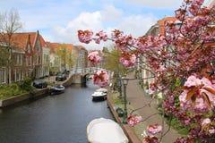 Holländskt kanallandskap i Leiden Holland Spring blommor Fotografering för Bildbyråer