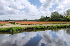 Holländskt kulafält nära floden i Lisse Arkivbilder