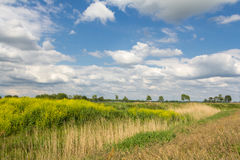 Holländskt löst landskap fotografering för bildbyråer